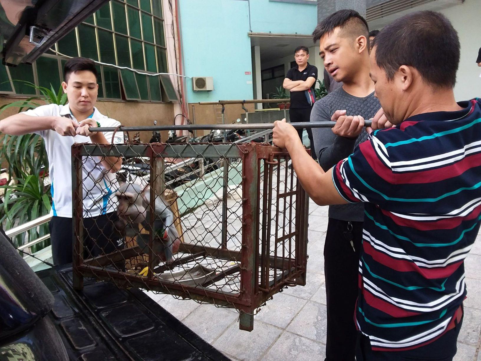Trường Xiếc Hà Nội chuyển giao một cá thể gấu ngựa cho Tổ chức Động vật châu Á - Ảnh 1.
