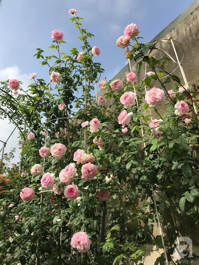 Lễ hội hoa hồng Bulgaria 2019 tại Hà Nội  - Ảnh 1.