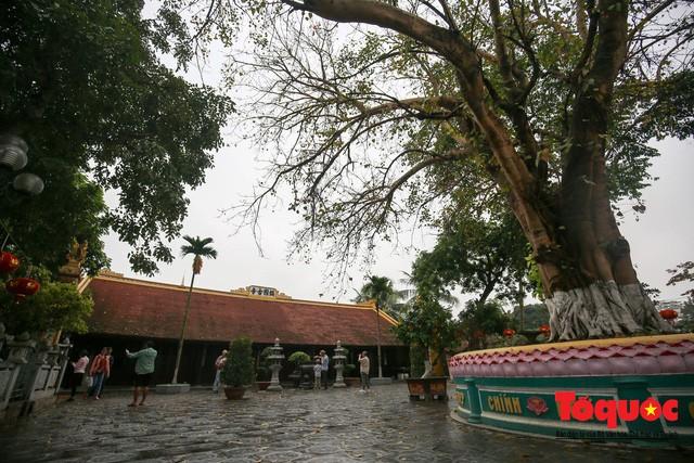 Không thể buồn hơn khi những quả bưởi trong ngôi chùa cổ nhất Hà Nội bị vẽ bậy - Ảnh 1.