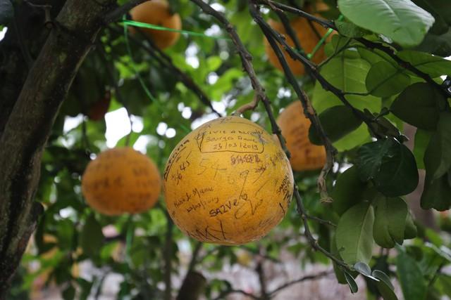 Không thể buồn hơn khi những quả bưởi trong ngôi chùa cổ nhất Hà Nội bị vẽ bậy - Ảnh 2.