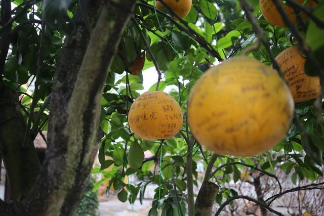 Không thể buồn hơn khi những quả bưởi trong ngôi chùa cổ nhất Hà Nội bị vẽ bậy - Ảnh 3.