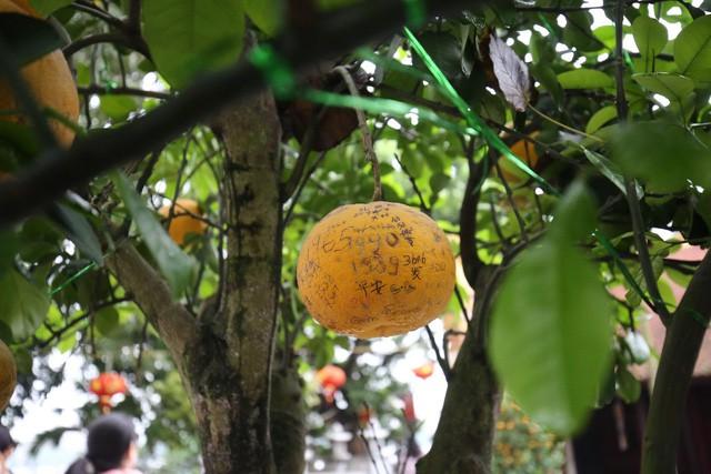 Không thể buồn hơn khi những quả bưởi trong ngôi chùa cổ nhất Hà Nội bị vẽ bậy - Ảnh 5.