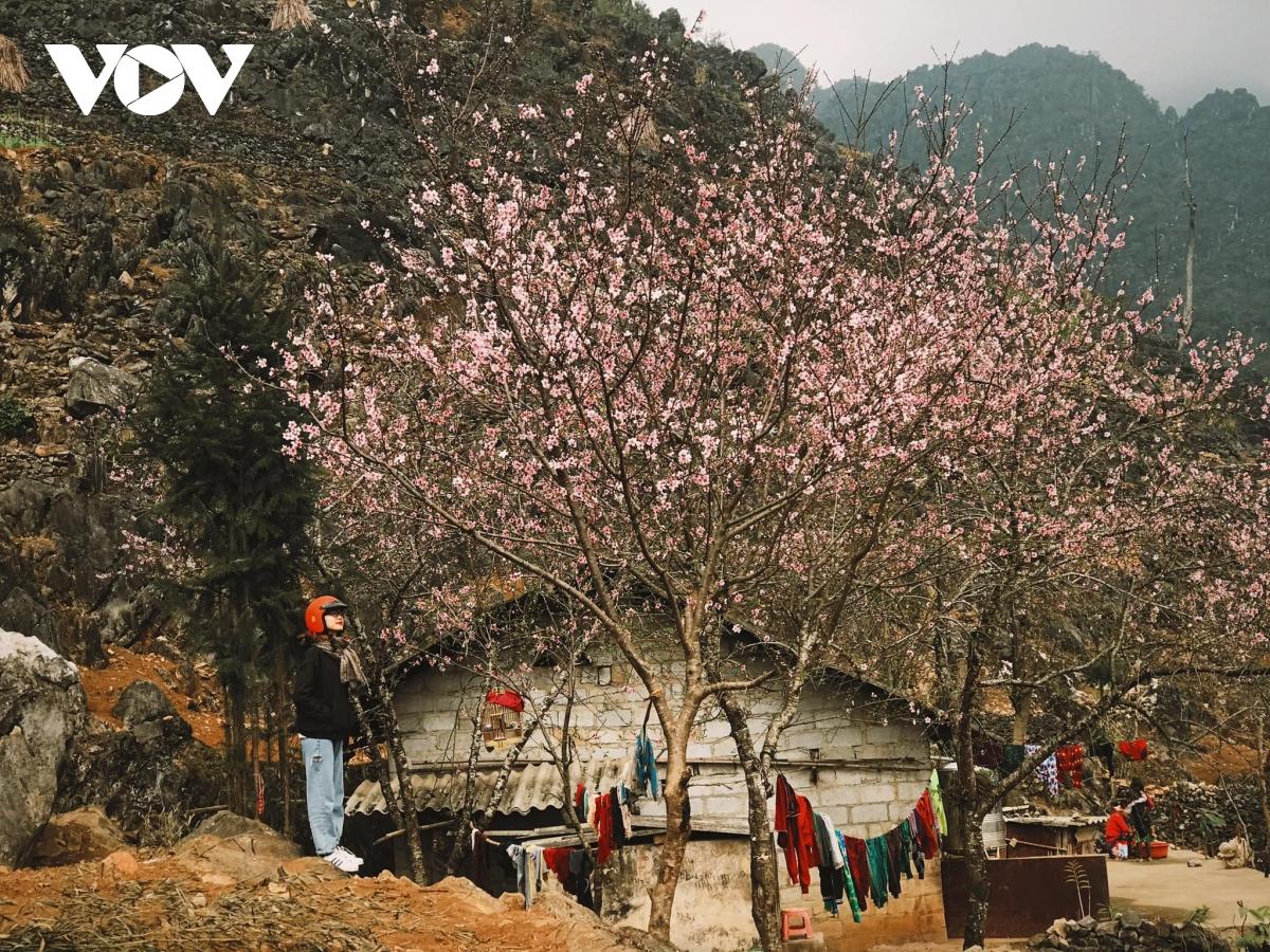 Du lịch Hà Giang vẫn hút khách bất chấp đại dịch Covid-19 - Ảnh 2.