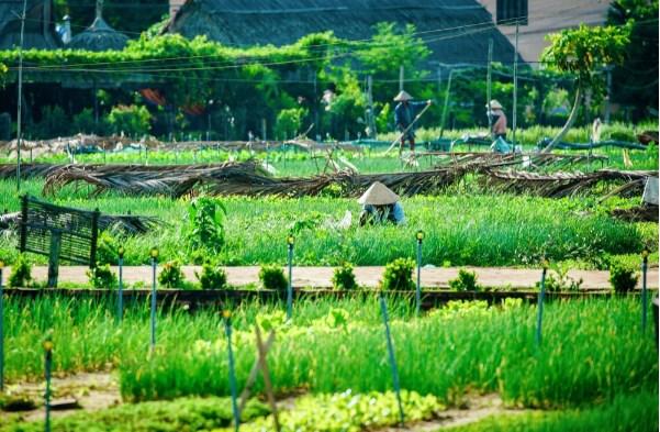 """""""Làn gió mát"""" từ du lịch nông thôn xứ Quảng - Ảnh 1."""