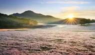 Lâm Đồng: Công bố Quy hoạch tổng thể phát triển Khu du lịch quốc gia Đankia-Suối Vàng
