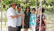 Lượng khách đến Ninh Thuận dịp nghỉ lễ tăng gấp 3 lần năm 2018