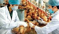Tập trung phòng, chống vi rút cúm A/H7N9 và các chủng vi rút cúm gia cầm