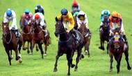 Bộ VHTTDL quy định tiêu chuẩn trọng tài, cơ sở vật chất với hoạt động đua ngựa
