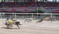 Bộ VHTTDL ra Thông tư quy định về hoạt động đua chó