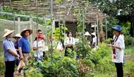 Bàn về sản phẩm du lịch sinh thái nông nghiệp tại thành phố Đà Nẵng