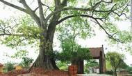 Những vướng mắc trong công tác quản lý và bảo tồn di tích tại Hà Nội