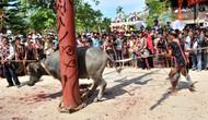 Kiểm tra thông tin báo chí phản ánh về lễ hội đâm trâu xã Hồng Tiến