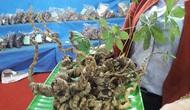 Trả lời kiến nghị của cử tri tỉnh Quảng Nam về một số vấn đề liên quan đến Lễ hội Sâm Ngọc Linh.