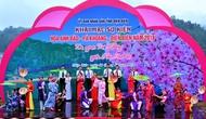 Từng bước đưa sự kiện Hoa Anh Đào – Pá Khoang - Điện Biên trở thành sản phẩm du lịch đặc trưng