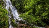 Quảng Bình: Điều chỉnh, bổ sung Đề án Điểm du lịch sinh thái và diễn giải môi trường Vườn thực vật.