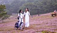 """Lâm Đồng: Miễn phí vé tham quan """"Mùa hội cỏ hồng Lang Biang năm 2018"""""""