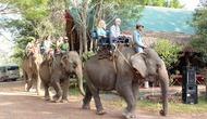 Đắk Lắk: Khảo sát một số tuyến, điểm du lịch tiềm năng trên địa bàn