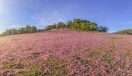 Mùa hội Cỏ hồng Lang Biang 2018 chính thức khai hội vào ngày 24/11