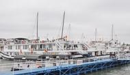 Triển khai thí điểm phương án quản lý, điều hành tàu ghép khách tham quan Vịnh Hạ Long