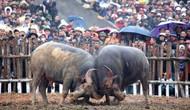 Kiểm tra công tác quản lý và tổ chức lễ hội trên địa bàn tỉnh Vĩnh Phúc