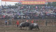 Đề nghị tăng cường giám sát, quản lý công tác tổ chức Lễ hội Chọi trâu xã Hải Lựu (Vĩnh Phúc)